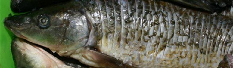 28 - peixe do rio