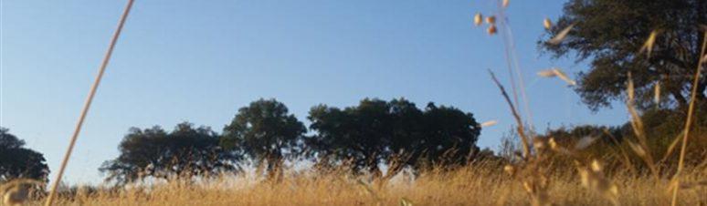 paisagem de santana