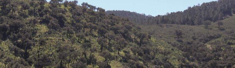 paisagem-mtrigo