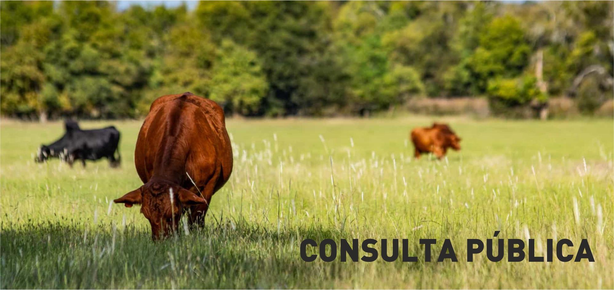 Consulta Pública – Projeto de Exploração Pecuária da Best Farmer – Núcleo de Produção 2